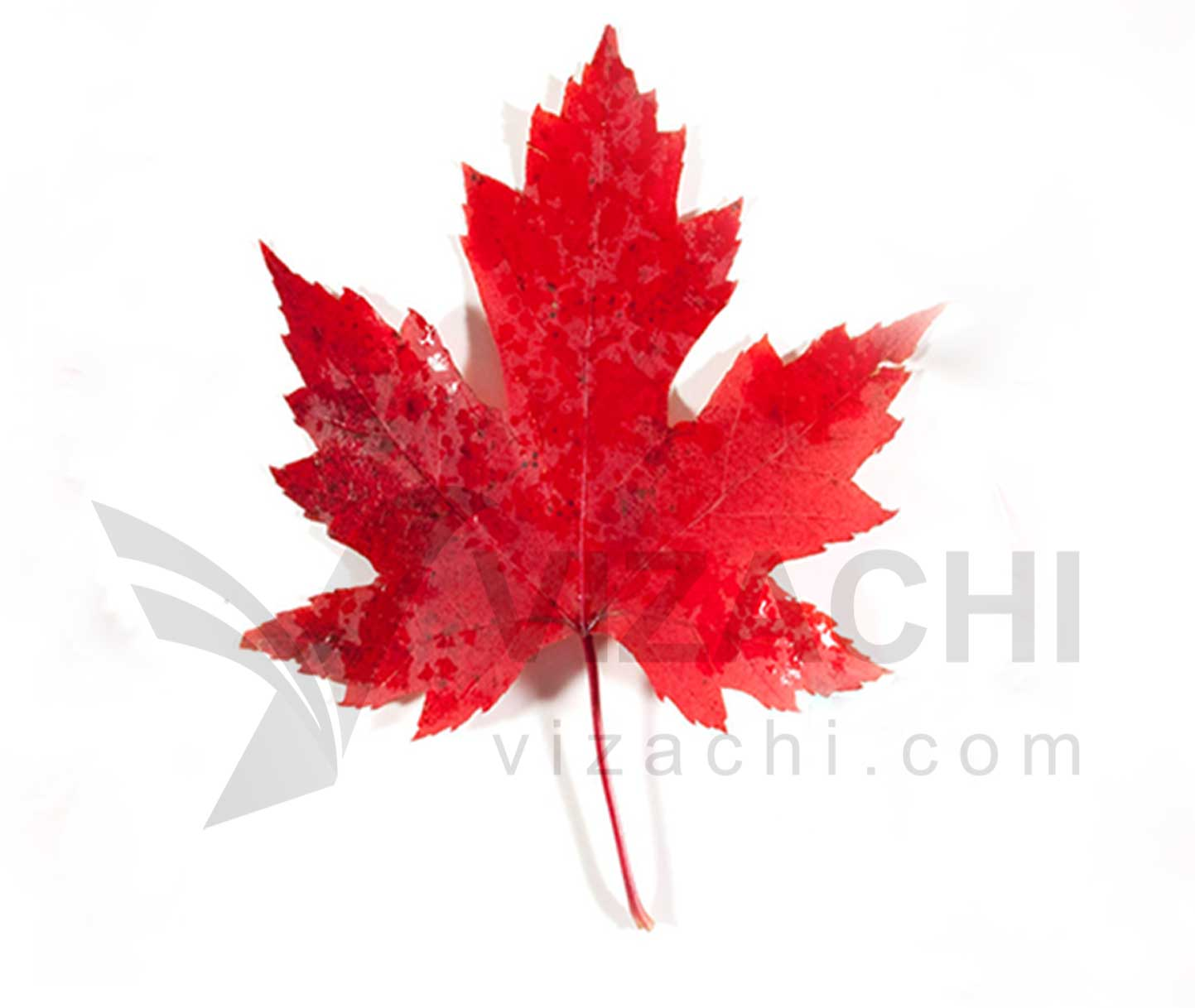 مهاجرت-به-کانادا-ویزای-کانادا-اقامت-کانادا-ویزای-تحصیلی-کانادا-اکسپرس-اینتری-ویزا-کانادا-پناهندگی-کانادا-اقامت-دائم-کانادا-ویزاچی-1-1